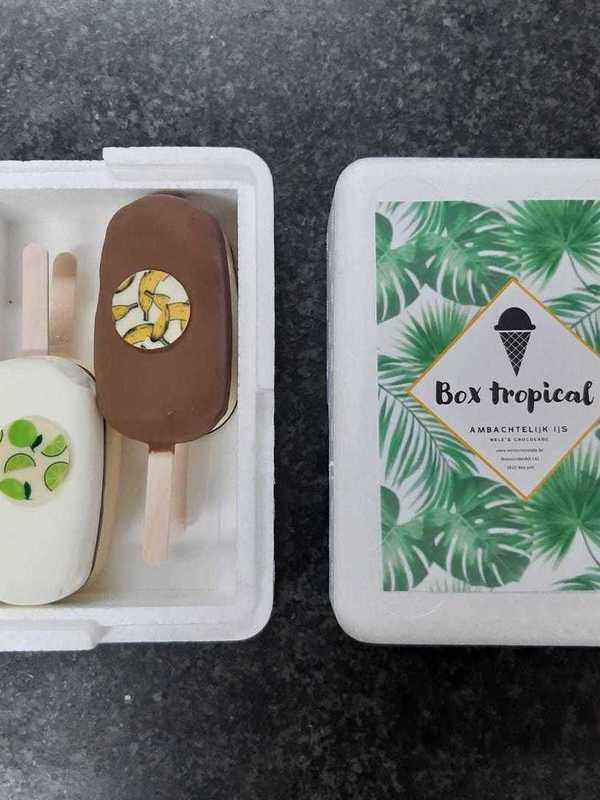 Box Tropical 4