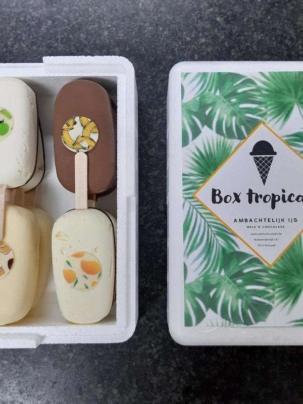Box Tropical 8